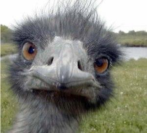 ostrich-743207